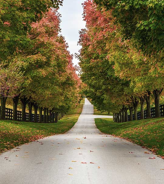 Country road in franklin, tennessee